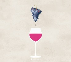 wine-grape-into-glass-illustrated-wine-folly